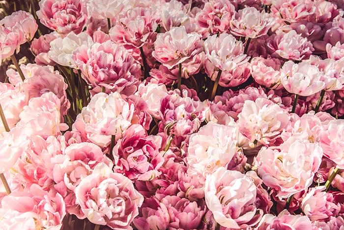 fiori per il matrimonio il matrimonio in puglia 1